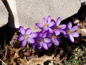 purple flower.0317