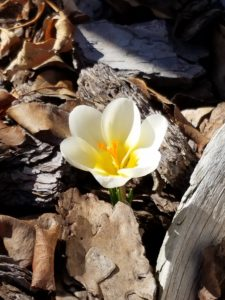 yellow flower.0317