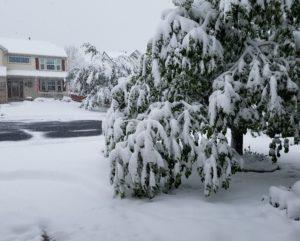 snow42917